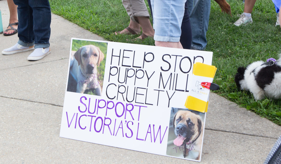 Support Victoria's Law